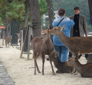 Japan Travel Destination Miyajima Deer