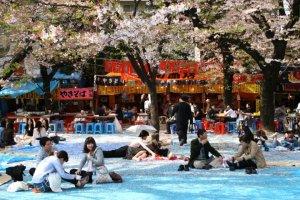 Japan Travel Photographs Sakura Cherry Blossom 2